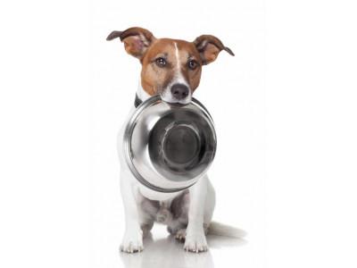 Норма сухого корма для собак в сутки