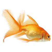 Товары для рыбок
